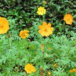 雨でお花も復活